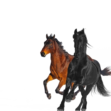 Lil Nas X feat. Billy Ray Cyrus (Old Town Road)